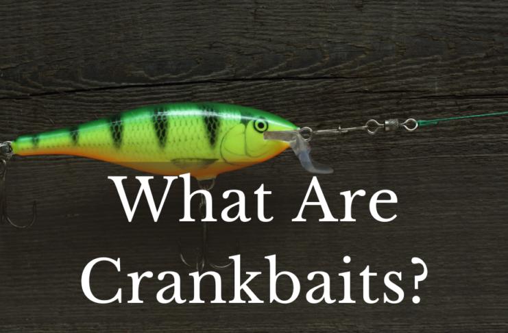 What Are Crankbaits